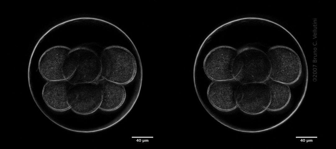 8 células 3D (stereo-pair)