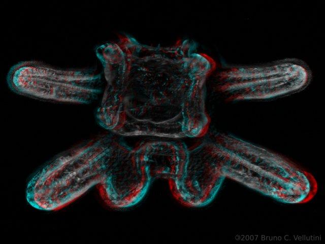 8 braços 3D (red-cyan)